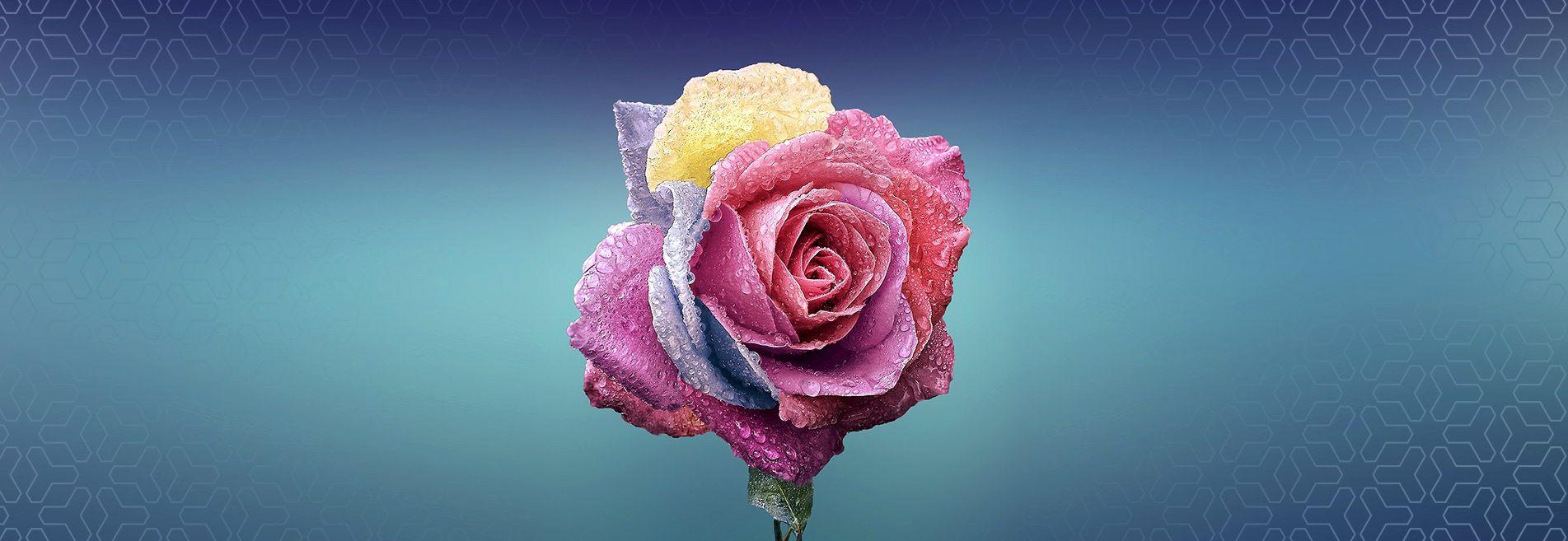 News from florists show in Slaskie Centrum Florystyczne Rekpol